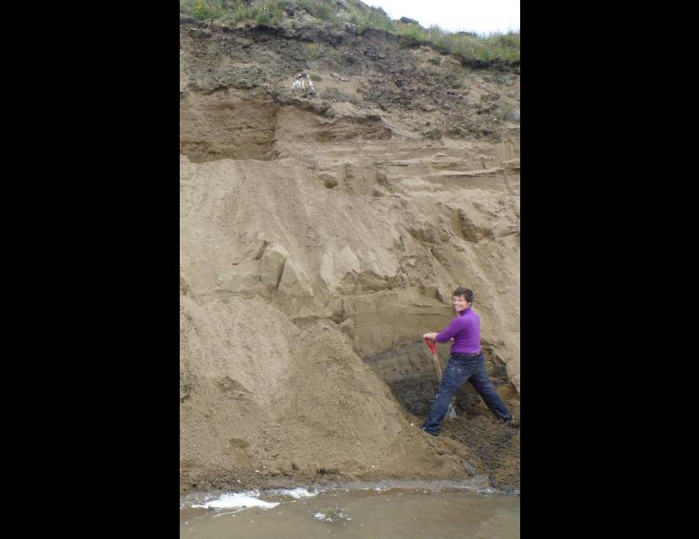 Louise Farquharson, a postdoctoral researcher at UAF's Geophysical Institute, digs into an ancient beach on the north shore of Teshekpuk Lake. Photo by Guido Grosse.