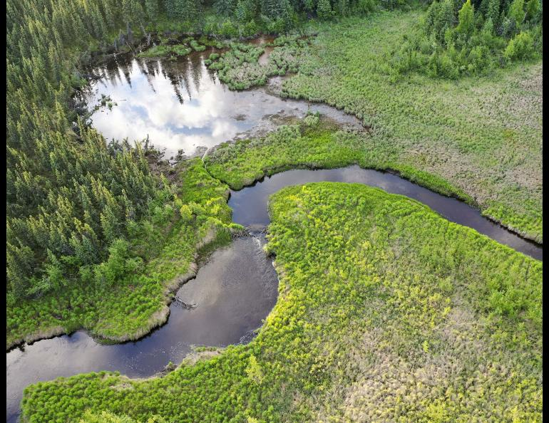 A view from above of a beaver dam on Goldstream Creek near Fairbanks. Photo by Ken Tape.