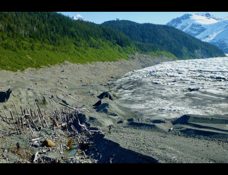 "A ""ghost forest"" exposed as La Perouse Glacier in Southeast Alaska retreated. In the past, the glacier ran over the rainforest trees. Two people are also in the photo. Photo by Ben Gaglioti."