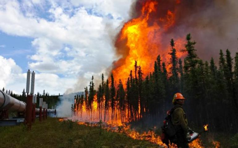 Photo by Phillip Spor Firefighters conduct a burnout operation along the trans-Alaska oil pipeline at the Aggie Creek Fire northwest of Fairbanks in 2015.
