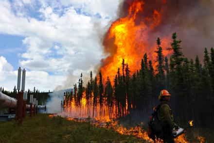 Firefighters conduct a burnout operation along the trans-Alaska oil pipeline at the Aggie Creek Fire northwest of Fairbanks in 2015. Photo by Phillip Spor