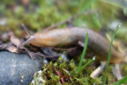 A slug in Shoup Bay, near Valdez, Alaska. Photo by Ned Rozell.
