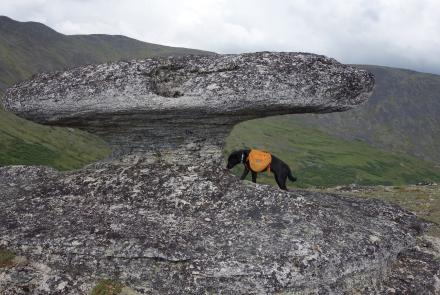 A mushroom-shaped granite tor about 60 miles from Fairbanks. Photo by Ned Rozell.