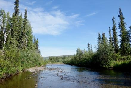 Prospect Creek in northern Alaska, shown here on a recent 80-degree summer day, has the record for Alaska's coldest temperature of minus 80 degrees F, on Jan. 23, 1971. Photo by Ned Rozell.